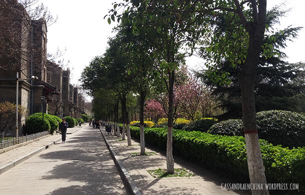 henan_university01