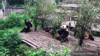china_chengdu_pandacenter011