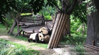 china_chengdu_pandacenter06